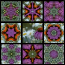 9 Square Purple Straw Flower 800 x 800