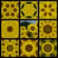 Full 9 Squares Blue Ribbon Winner Sunflower 800 x 800 WM