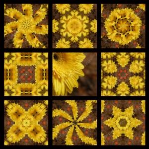 Full 9 Squares DSC02708 Yellow Mum 800 x 800 WM
