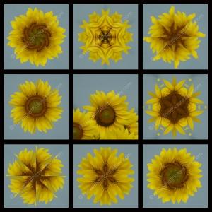 Full 9 Squares Sunflower Matches Blue Ribbon Winner 800 x 800 WM